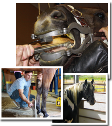 A group of photos of Equine veterinary services. The top photo is of a dental check, the left photo is of a vet checking the hooves, and the right photo is of a black and white horse