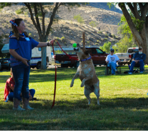 A young girl throwing a ball to her dog in the dog show